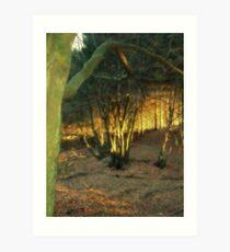In The Elven Wood Art Print
