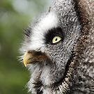 Profile view Great Grey Owl by derbyshireduck