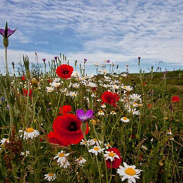 English Wild Flowers by Violaman