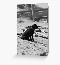 BoardDog Greeting Card