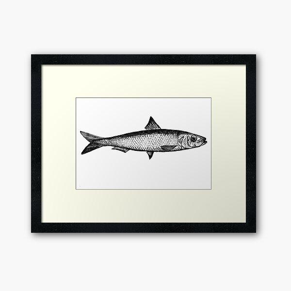 Sardine illustration ink drawing Framed Art Print