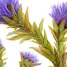 Thistles I by Helen Dannelly