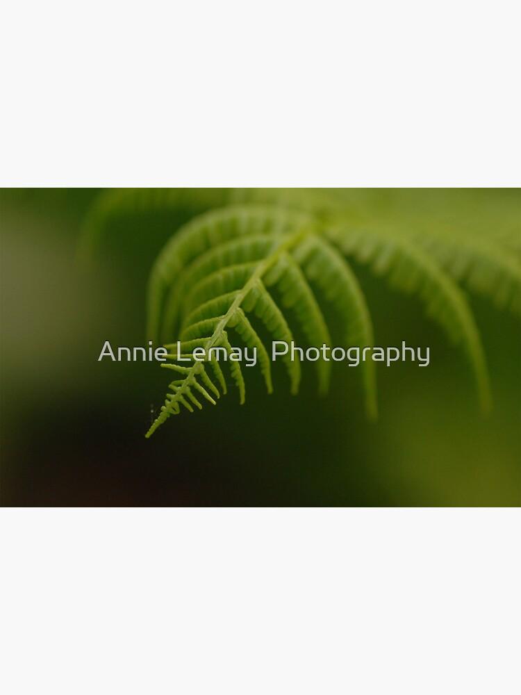Fern Leaf by ajlphotography
