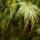 Japanese Maple by Ann Garrett
