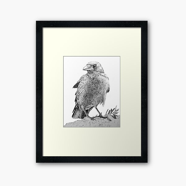 The crow with olive brunch Framed Art Print