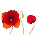 Poppy Trio by Helen Dannelly