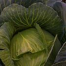 Fresh Vegetable Garden Cabbage by Bo Insogna