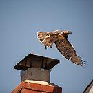 Taking Flight by Martha Burns