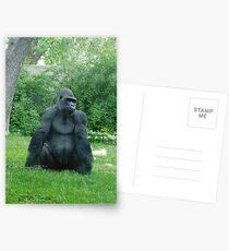 Denver zoo gorilla Postcards