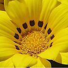 Yellow Flowers In Whangarei by lezvee