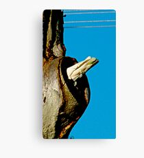 what's in here ? Canvas Print