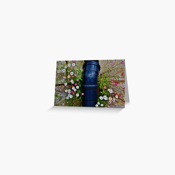 drainpipe and daisies  Greeting Card
