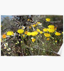 High Desert wild Flowers 2 Poster