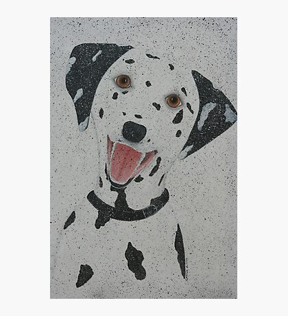 Dalmation Photographic Print