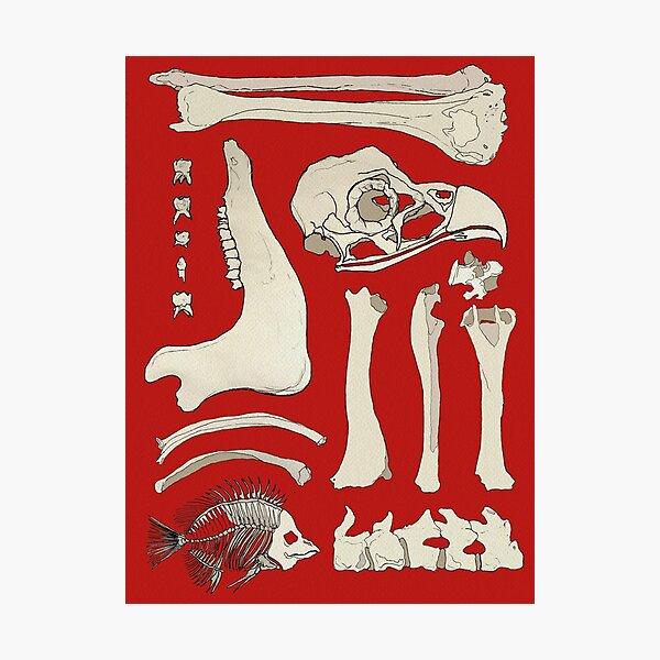 Nothing But Bones Photographic Print