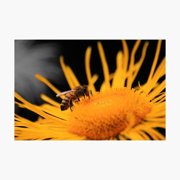 Flower Raider Photographic Print