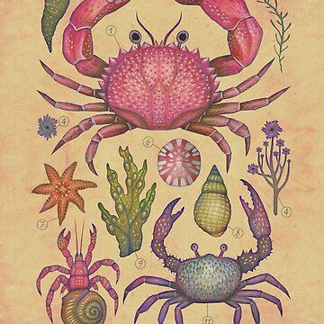 Marine Life I by vladimirsart