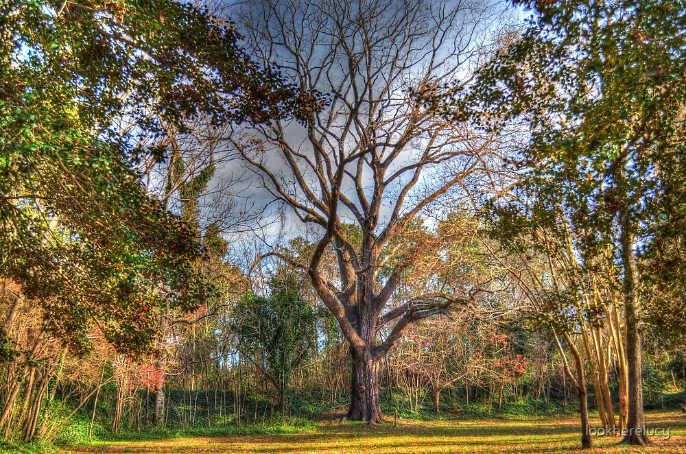 Majestic Walnut Tree by lookherelucy
