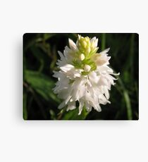 O'Kelly's Spotted-orchid  Canvas Print