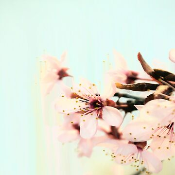 Spring blossoms on baby blue background by by-jwp