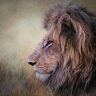 Majestic. by Lyn Darlington