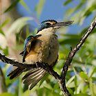 Sacred Kingfisher by Vickie Burt