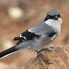 Bird by travelingpixel