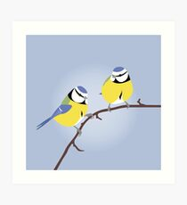 Blue Tit British bird Art Print
