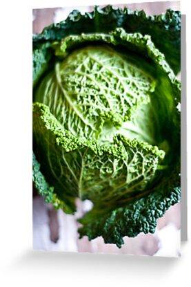 Savoy cabbage by Ilva Beretta