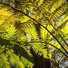 Looking up to a beautiful sunglowing fern in a tropical forest by Danielasphotos