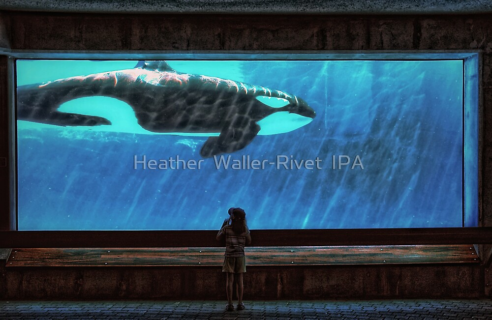 The Encounter by Heather  Waller-Rivet  IPA