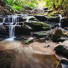 Leura Cascades - Blue Mountains, Australia. by Danielasphotos