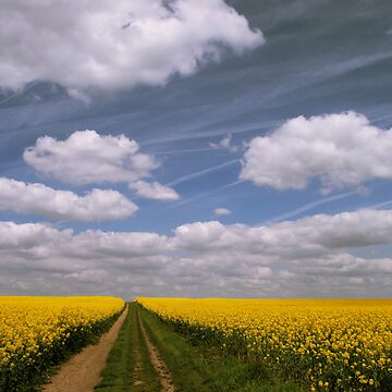 Flowers and Clouds by Donna-R