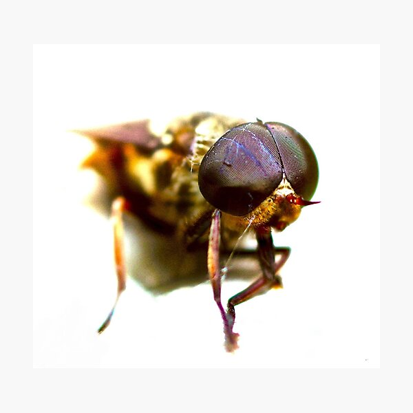 RISE OF THE FLIES Photographic Print