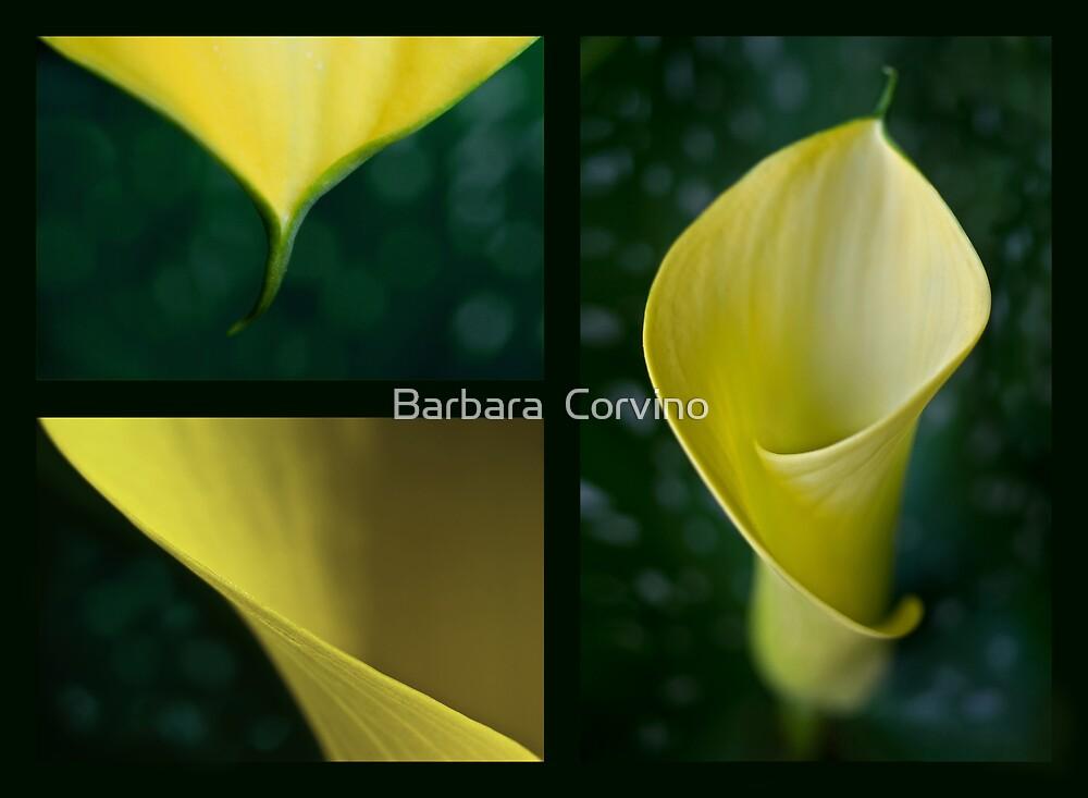 The yellow calla by Barbara  Corvino