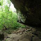 Devil's Standtable Nature Trail #2 by Daniel Owens