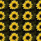 Sunlit Sunflower by DenverCool
