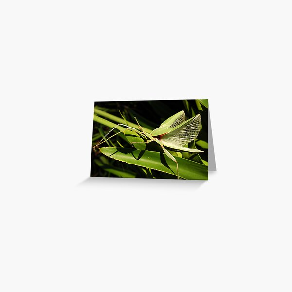 Violet Stick Insect 2 Greeting Card