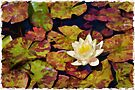 Water lily - watercolour by PhotosByHealy