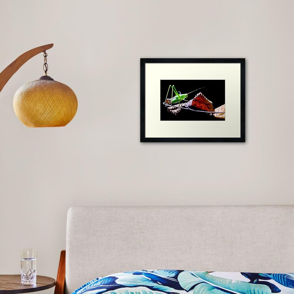 Katydid at Night Framed Art Print