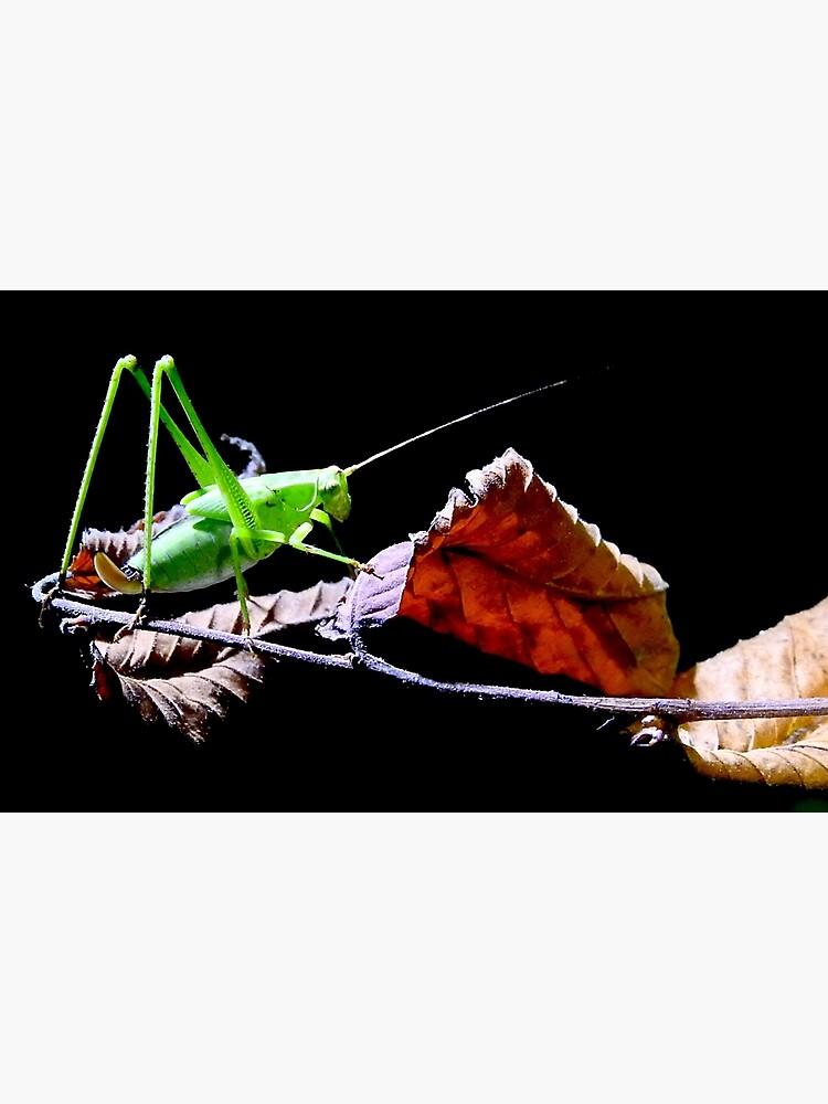 Katydid at Night by nanonaturalist