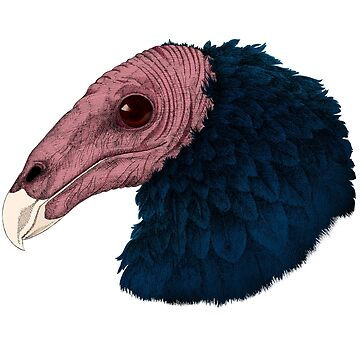 Vulture by SigneNordin