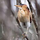 Least Bittern by lloydsjourney