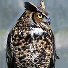 Great Horned Owl by barnsis