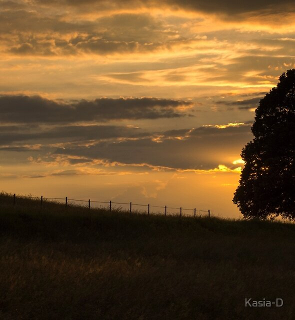 Lime Tree at Sunset by Kasia-D