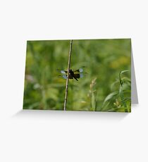 Dragon Fly Greeting Card