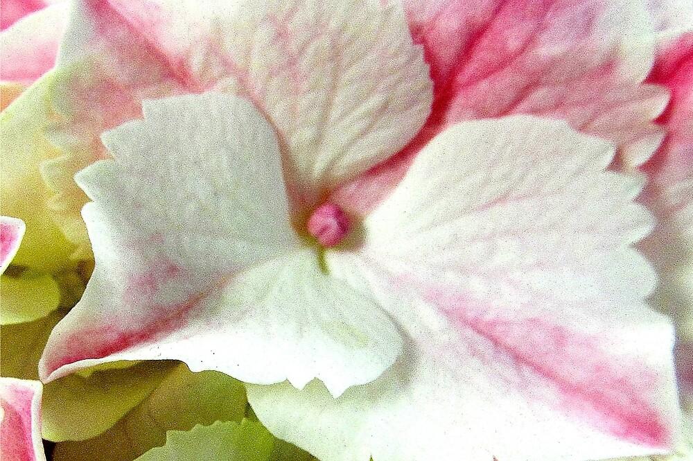 Pretty in Pink by Joan Harrison