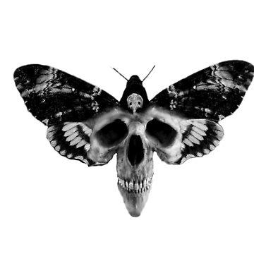 Skull Dead Moth by diana2266