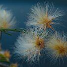 Flor silvestre.... by cieloverde