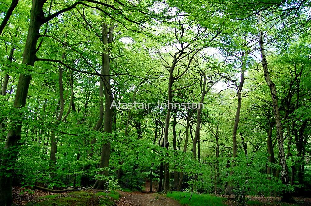 Spring Woodland by Alastair Johnston